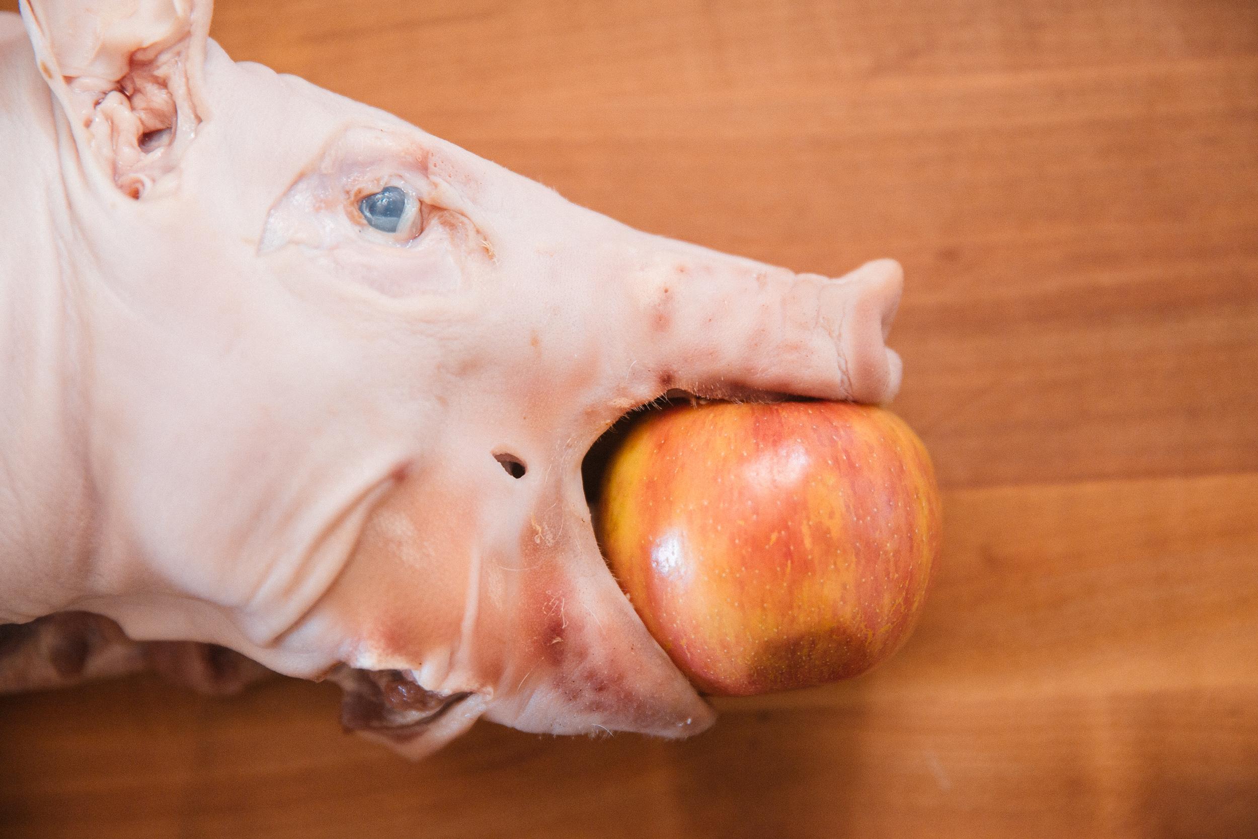 Tender, Crispy-Skinned Whole Suckling Pig | Sous Vide Recipe ...
