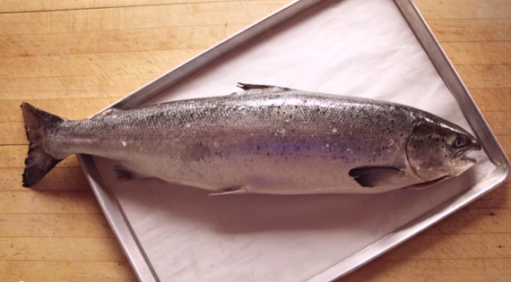 Salmon - Ingredient | ChefSteps